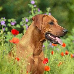 Hunde Blog Parasitenprophylaxe