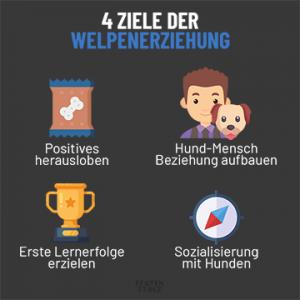 4 Ziele der Welpenerziehung   Positives loben - Beziehung aufbauen - Erfolge erzielen - Sozialisierung