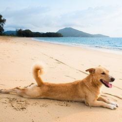 Blog Hund Urlaub