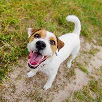 Blog Motivation des Hundes