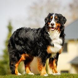 Blog Ethnologie des Hundes