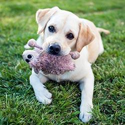 3 Grundbausteine der Hundeerziehung